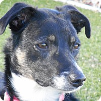 Adopt A Pet :: Penny - Meridian, ID