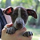 Adopt A Pet :: Gena