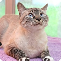 Adopt A Pet :: Missy Mae - San Antonio, TX