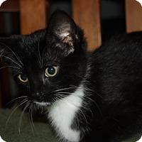 Adopt A Pet :: Trip (LE) - Little Falls, NJ