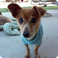Adopt A Pet :: Carla - Creston, CA