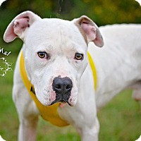 Adopt A Pet :: Shadow - Fort Valley, GA