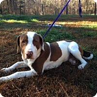 Adopt A Pet :: Hudson - Norcross, GA