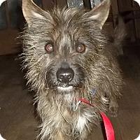 Adopt A Pet :: Dickens - Memphis, TN