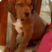 Adopt A Pet :: Charlie - Toms River, NJ