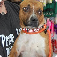 Adopt A Pet :: April - Brooklyn, NY