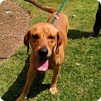 Adopt A Pet :: Maverick - Hermitage, TN
