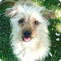 Adopt A Pet :: Duck-ADOPTION PENDING - Boulder, CO