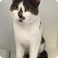 Adopt A Pet :: Beamer - Merrifield, VA
