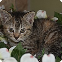 Adopt A Pet :: Kiki - Richmond, VA