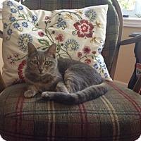 Adopt A Pet :: Kayla - Caistor Centre, ON