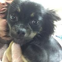 Adopt A Pet :: Jenga - Lewisburg, TN