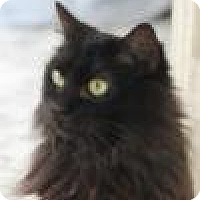 Adopt A Pet :: Tinsley, Stunning, Shy Tiffany - Brooklyn, NY