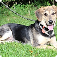 Beagle Mix Puppy for adoption in Portage, Wisconsin - Shelby