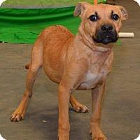 Adopt A Pet :: Trixie (URGENT) - Salem, MA