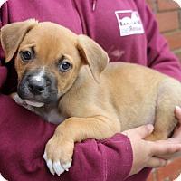 Adopt A Pet :: Benny - Harrison, NY