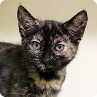 Adopt A Pet :: Danielle - Red Bluff, CA