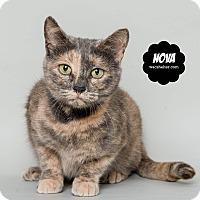 Adopt A Pet :: Nova - Wyandotte, MI
