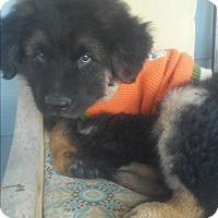 Adopt A Pet :: Oso - El Cajon, CA