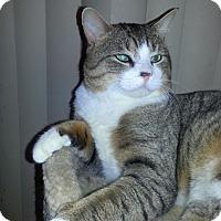 Adopt A Pet :: Damon - Huntsville, AL