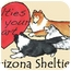Photo 4 - Sheltie, Shetland Sheepdog Dog for adoption in apache junction, Arizona - Susie