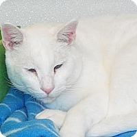 Adopt A Pet :: clorox - El Cajon, CA