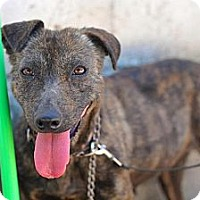 Adopt A Pet :: Helen - San Diego, CA