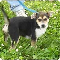 Adopt A Pet :: Melody - Braintree, MA