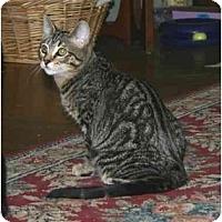 Adopt A Pet :: Jack - Portland, OR