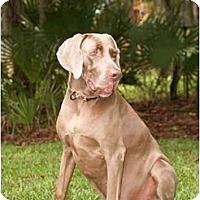 Adopt A Pet :: Abe - Eustis, FL