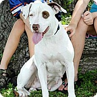 Adopt A Pet :: Princess - Bartow, FL