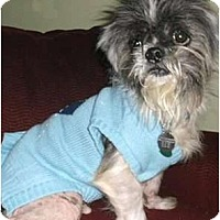 Adopt A Pet :: Gizmo - Mooy, AL