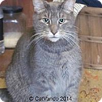 Adopt A Pet :: Booboo - Maywood, IL