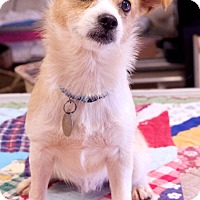 Adopt A Pet :: Miles - Marietta, GA