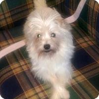 Adopt A Pet :: Chet - Jacksonville, FL