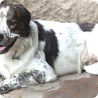 Adopt A Pet :: Gage - MEET HIM!! - Norwalk, CT