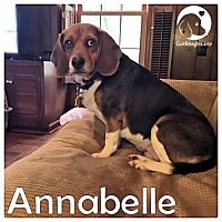 Adopt A Pet :: Annabelle - Novi, MI