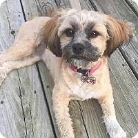 Adopt A Pet :: Maddie - LEXINGTON, KY