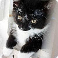 Adopt A Pet :: Timothy - Ann Arbor, MI