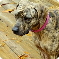 Adopt A Pet :: Penny - Toms River, NJ