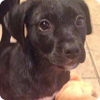 Adopt A Pet :: Reggie - West Bend, WI
