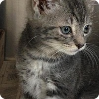 Adopt A Pet :: Poncho - East Brunswick, NJ
