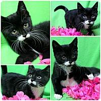 Adopt A Pet :: Legend - Forked River, NJ