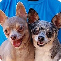 Adopt A Pet :: Elizabeth - Las Vegas, NV