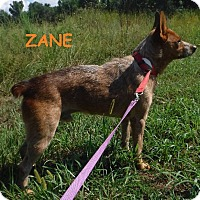 Adopt A Pet :: Zane - Batesville, AR