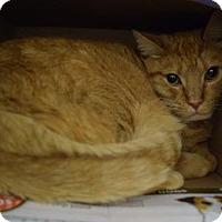 Adopt A Pet :: Harley - Canastota, NY