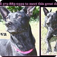 Labrador Retriever/German Shepherd Dog Mix Dog for adoption in Cuba, Missouri - Nova