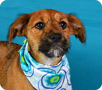 Terrier (Unknown Type, Medium) Mix Puppy for adoption in Jackson, Mississippi - Dixie