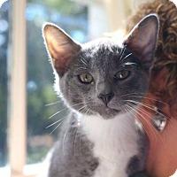 Adopt A Pet :: Louie - Butner, NC