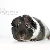 Adopt A Pet :: Palmetto - Reisterstown, MD